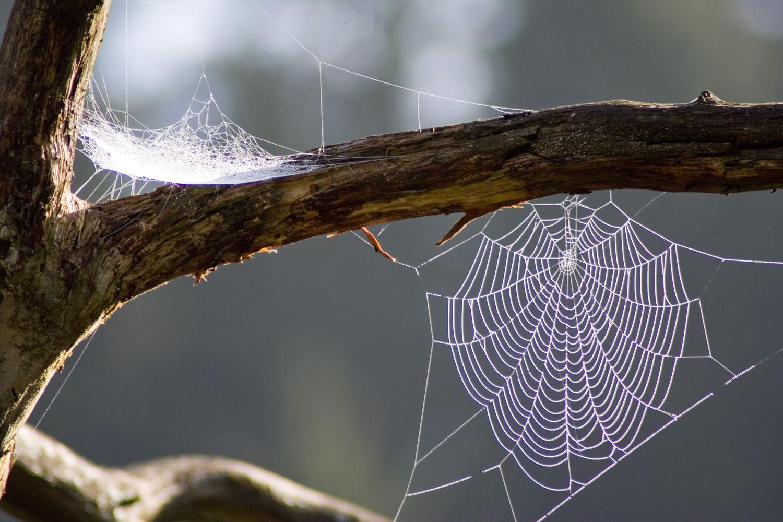 Lugares tela de ara a nomadeando ando - Como hacer tela de arana ...