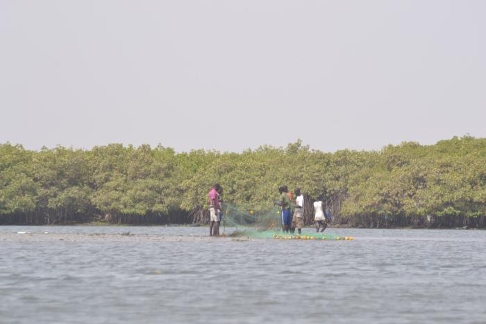 reclectores de coquinas, Senegal