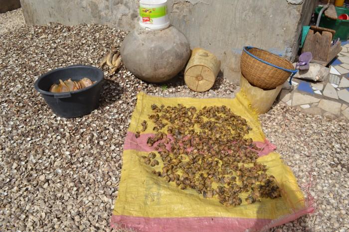 berberechos secandose al sol