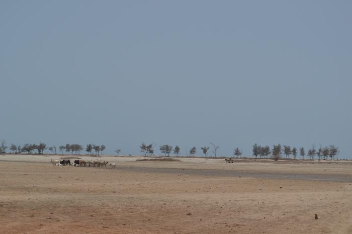 Camino a Djifer
